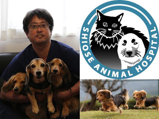 横浜動物病院しおせ犬猫